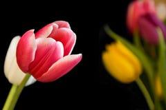 Tulpen nahe und weit stockfotos