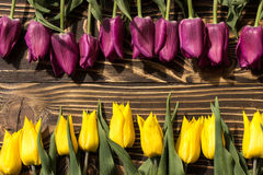Tulpen Nederlandse geel en violet Royalty-vrije Stock Foto