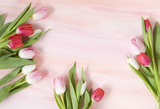 Tulpen op de achtergrond van de pastelkleurwaterverf voor de lente Royalty-vrije Stock Foto