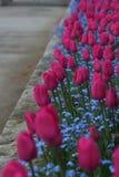 Tulpen op een rij Royalty-vrije Stock Afbeelding