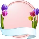 Tulpen op een roze grens met blauwe banner Royalty-vrije Stock Afbeelding