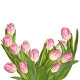 Tulpen op een witte achtergrond Eps 10 Stock Afbeeldingen