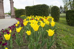 Tulpen op het bloembed Royalty-vrije Stock Foto