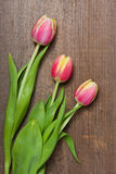 Tulpen op hout Stock Afbeeldingen