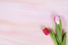 Tulpen op waterverfachtergrond voor de lente Stock Fotografie