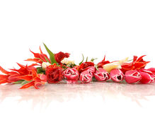 Tulpen op wit Royalty-vrije Stock Fotografie