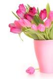 Tulpen op wit stock afbeeldingen