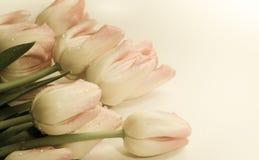 Tulpen op witte achtergrond stock afbeelding