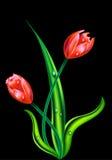Tulpen op zwarte Royalty-vrije Stock Fotografie