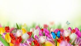 Tulpen over vage groene achtergrond Royalty-vrije Stock Afbeelding