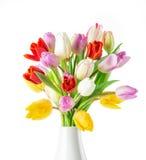 Tulpen over witte achtergrond Royalty-vrije Stock Afbeeldingen