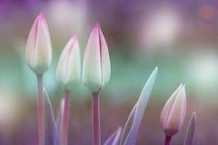 Tulpen Playnig mit Leuchte Blüht Fotokonzept Lizenzfreies Stockbild