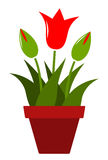 Tulpen in pot Royalty-vrije Stock Afbeelding