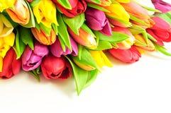 Tulpen-Regenbogen-Mischbündel-oberster weißer Hintergrund Stockfotos