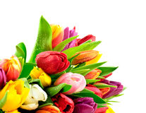 Tulpen-Regenbogen-Mischbündel Waterdrops naß stockbilder