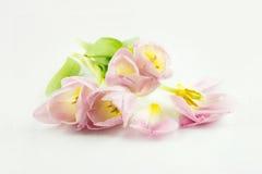 Tulpen Rosafarbene Blumen auf einem weißen Hintergrund Lizenzfreie Stockfotografie