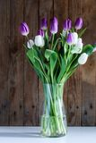 Tulpen - Ultraviolet Royalty-vrije Stock Foto's