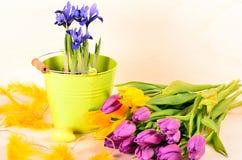 Tulpen und Blendenblumen Stockfoto