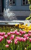 Tulpen und Brunnen im Park Stockfotografie