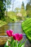 Tulpen und der Oos-Fluss in Baden-Baden Lizenzfreie Stockbilder