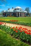 Tulpen und Gehweg Monticello stockbild