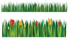 Tulpen und Gras Stockfotografie