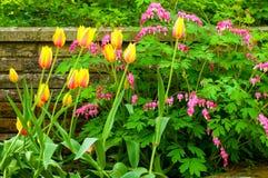 Tulpen und Herzen Stockbild