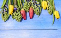 Tulpen und Hyazinthen Stockfotos