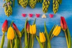 Tulpen und Hyazinthen Stockbilder