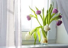Tulpen und Hyazinthen auf dem Fenster lizenzfreie stockfotos