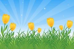 Tulpen und Löwenzahn Lizenzfreies Stockfoto
