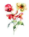 Tulpen- und Mohnblumenblumen Lizenzfreie Stockfotos