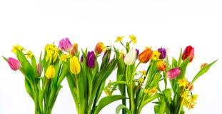 Tulpen und Narzissen lokalisiert auf weißem Hintergrund Hohes Auflösungbild stockfotografie