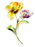 Tulpen- und Pfingstrosenblumen Stockbild