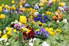 Tulpen- und Stiefmütterchenblume Stockfotografie