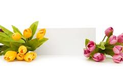 Tulpen und unbelegte Meldung lizenzfreie stockfotografie