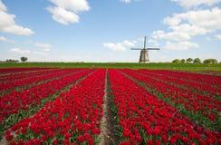 Tulpen und Windmühle Stockfotografie