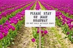 Tulpen und Zeichen Stockbilder