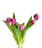 Tulpen in vaas Royalty-vrije Stock Afbeeldingen