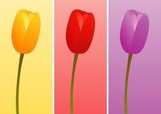 Tulpen van Verschillende Kleuren Royalty-vrije Stock Afbeelding