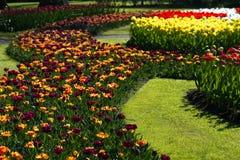 Tulpen in vielen Farben im Frühjahr Stockbild