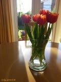 Tulpen von Amsterdam Stockbild