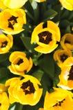 Tulpen von der Draufsicht Stockbild