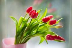 Tulpen voor een venster Stock Afbeeldingen