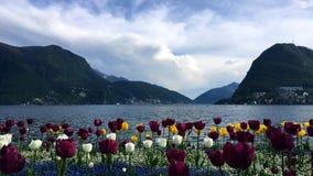 Tulpen voor het meer stock fotografie