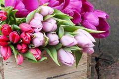 Tulpen voor verkoop royalty-vrije stock foto