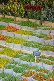 Tulpen voor verkoop in de bloemmarkt, Amsterdam Stock Afbeelding
