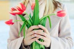 Tulpen in vrouwelijke handen De lente mooie samenstelling met vage achtergrond stock afbeelding