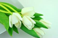 Tulpen in wit royalty-vrije stock foto