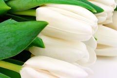 Tulpen in wit stock afbeelding